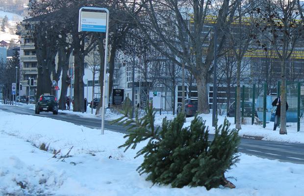 Gut 20 Tonnen Christbäume entsorgt
