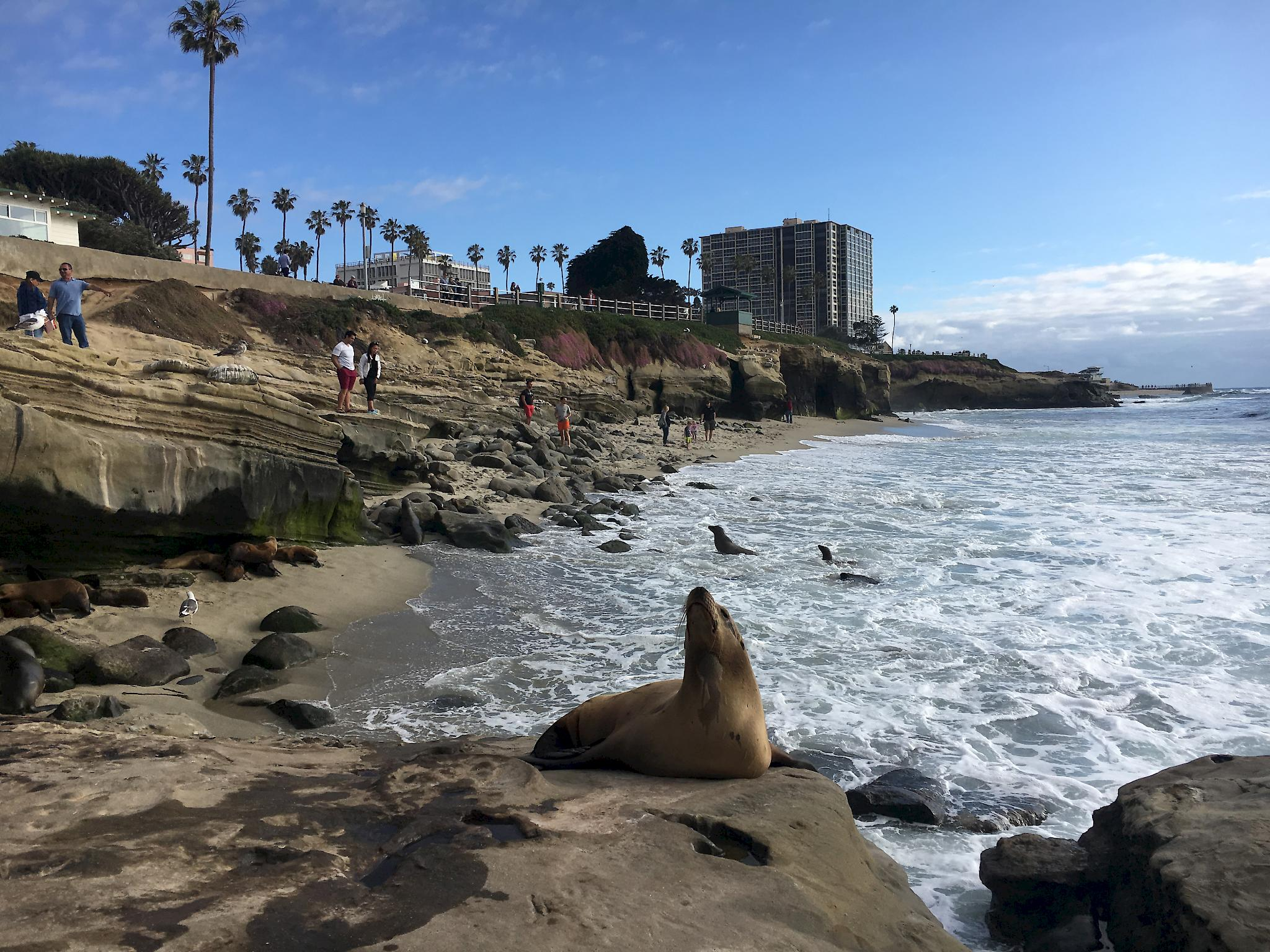 La jolla dating scene